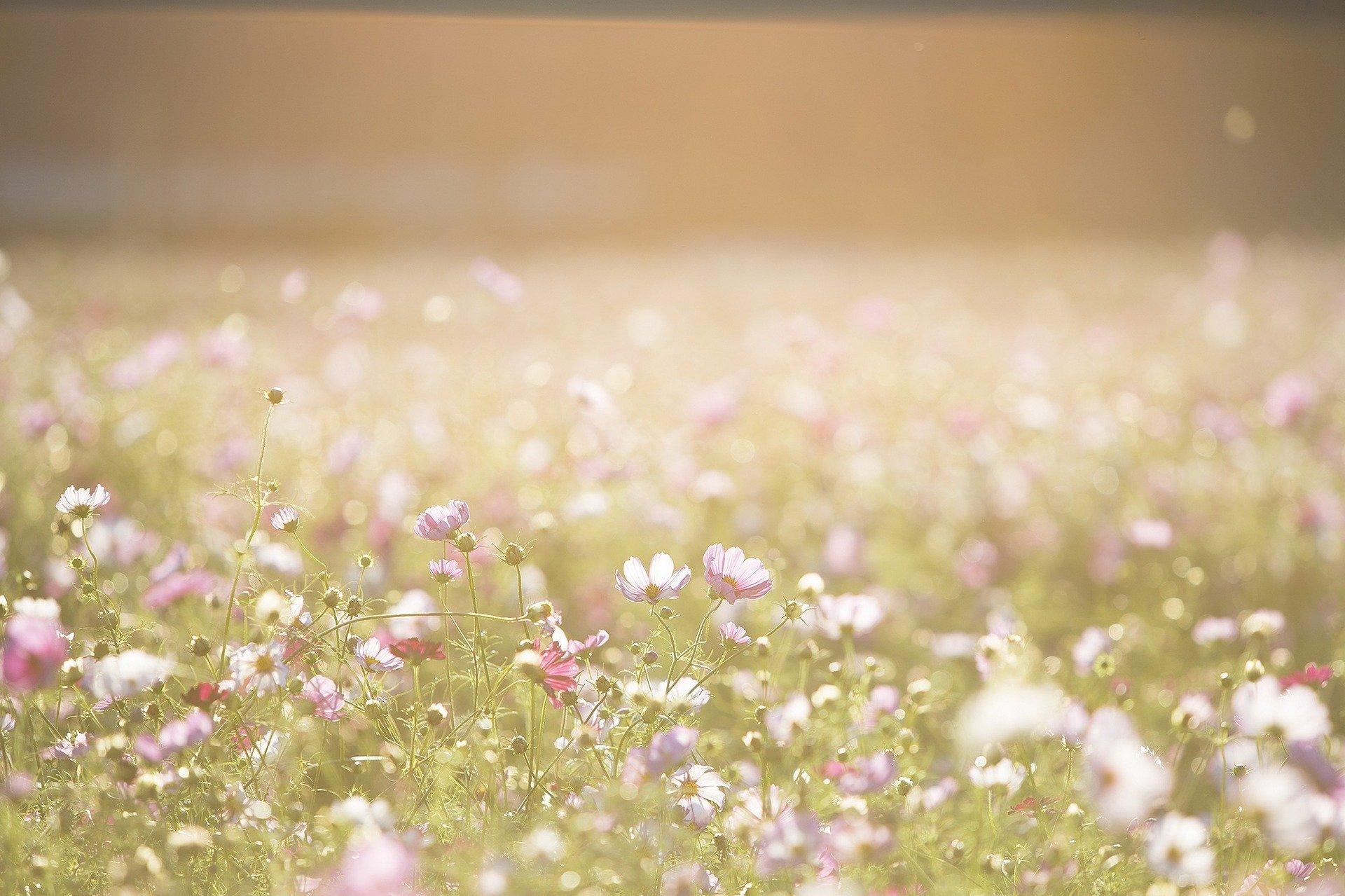Paisaje jardín de flores