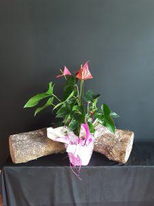 Anthurium flor rojo.