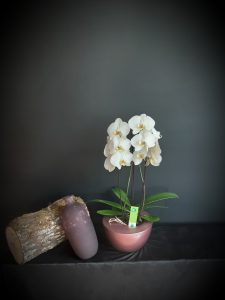Tiesto con orquídea y jarrón.