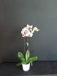 Tiesto con orquídea.
