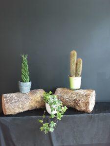 Decoración sansevieria, cactus e hiedra.